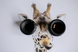 Functional Lenses